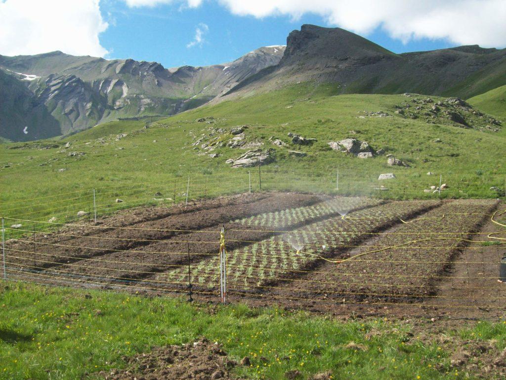 Plates bandes plantées en juin 2014