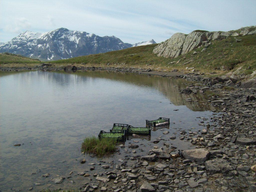 petite trempette des plants dans le lac voisin pour un bon redémarrage