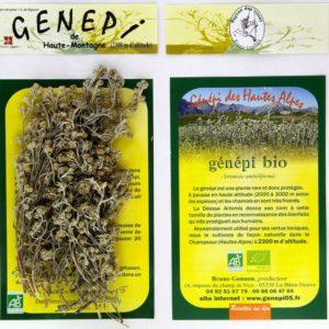 Génépi jaune -genepi05.fr