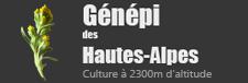 Génépi des Hautes-Alpes